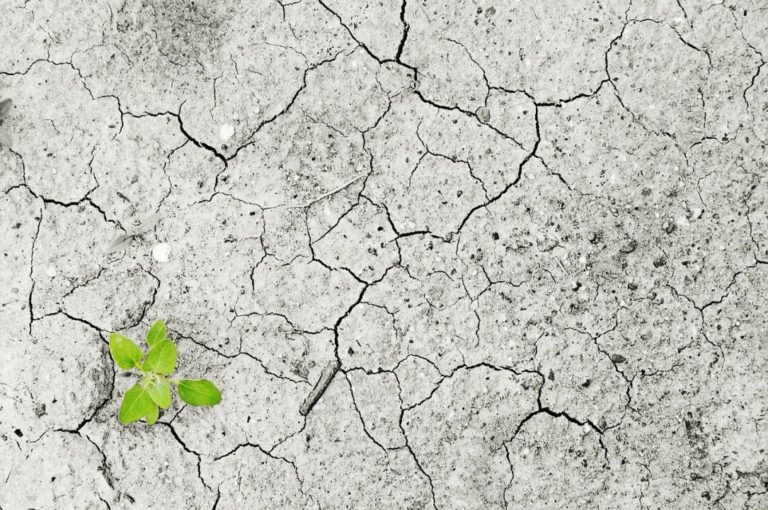 Read more about the article Si tous les signataires du Manifeste étudiant pour un réveil écologique partent travailler chez Patagonia, le monde de demain sera-t-il meilleur ?